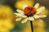 2011 0424 花:IMG_1638.jpg