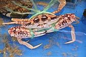 2011 0406 螃蟹走路:IMG_7763.jpg