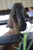 2011 0205 羊世界:IMG_2683.jpg