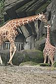 2011 0201 台北 動物園:IMG_9722.jpg