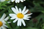 2011 0424 花:IMG_1655.jpg
