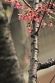 2011 0228       櫻:IMG_7925.jpg