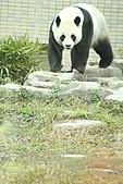 2011 0201 台北 動物園:IMG_9385.jpg