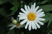 2011 0424 花:IMG_1657.jpg