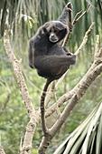 2011 0201 台北 動物園:IMG_9452.jpg