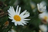 2011 0424 花:IMG_1664.jpg