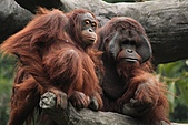 2011 0201 台北 動物園:IMG_9496.jpg