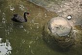2011 0201 台北 動物園:IMG_9501.jpg