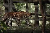 2011 0201 台北 動物園:IMG_9527.jpg