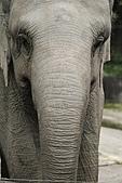 2011 0201 台北 動物園:IMG_9531.jpg