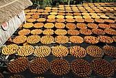 2010 1101 新埔 柿餅:IMG_3824.jpg