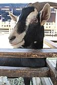 2011 0205 羊世界:IMG_2591.jpg