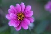 2011 0424 花:IMG_1616.jpg