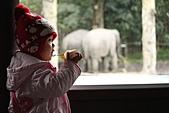 2011 0201 台北 動物園:IMG_9591.jpg