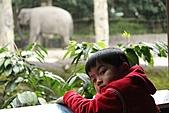 2011 0201 台北 動物園:IMG_9621.jpg