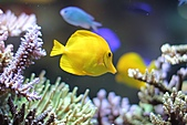 2010 1020 魚:IMG_2341.jpg