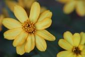 2011 0424 花:IMG_1617.jpg