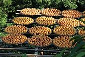 2010 1101 新埔 柿餅:IMG_3836.jpg