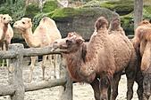 2011 0201 台北 動物園:IMG_9657.jpg