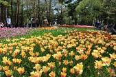 2015東日本賞花之旅~茨城ひたち海浜公園: