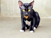 十個女生泰國行, 2012:眼睛很有戲的貓