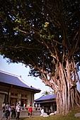 遊│:住著龍貓的大樹