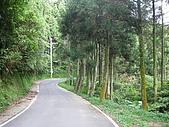 98單騎挑戰熊空山:又見杉木林