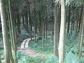98單騎挑戰熊空山:杉林步道,可以來場森林浴