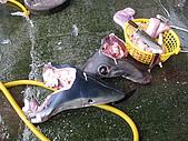 2009 永不放棄--洄瀾極限挑戰200K:2顆孤獨的「鯊魚頭」