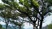 2016-07-29 烘爐山,枕頭山,十八彎古道 0形:P_20160729_133032.jpg