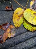 2014-11-15 永福龍山寺步道:IMG_20141115_114928.jpg