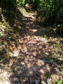 2016-07-22 玉蘭茶園步道:P_20160722_131738.jpg
