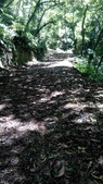 2014-09-06 觀日台步道:IMG_20140906_113604.jpg