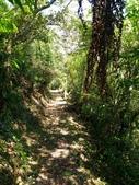 2016-07-22 玉蘭茶園步道:P_20160722_131944.jpg