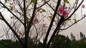 2015-10-24桃園長庚:挑戰步道:P_20151024_152820.jpg