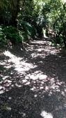 2014-09-06 觀日台步道:IMG_20140906_113235.jpg