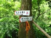 2016-08-12 三貂嶺瀑布,五分寮山 0形:IMG_9288.jpg