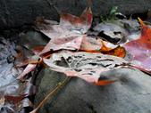 2014-12-29 蓬萊護魚步道:IMG_20141229_123327.jpg