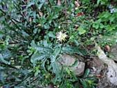 2010-05玉山:DSC00962.JPG