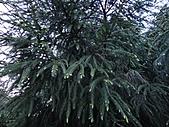 2010-05玉山:DSC00956.JPG