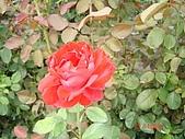 中社花園:DSC00009.jpg