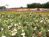 中社花園:DSC00011.jpg