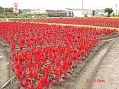 中社花園:DSC00013.jpg