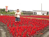 中社花園:DSC00014.jpg