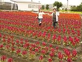 中社花園:DSC00022.jpg