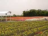中社花園:DSC00027.jpg
