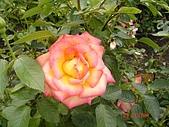 中社花園:DSC00001.jpg