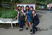 2009新社薰衣草森林:P1010574.jpg