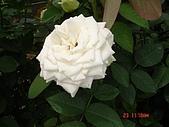 中社花園:DSC00004.jpg