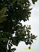 岡山風采(實踐大學戶外教學) 2010.5.31:岡山風采 166.jpg